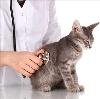 Ветеринарные клиники в Ершовке